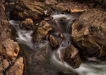 Anthropomorphic faces in a stream