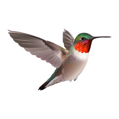 Flying Ruby-troathed hummingbird with colorful glossy plumage