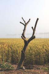Cut tree on field,vintage