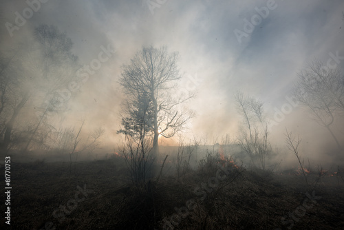 Fire in the mixed wood forest. - 81770753