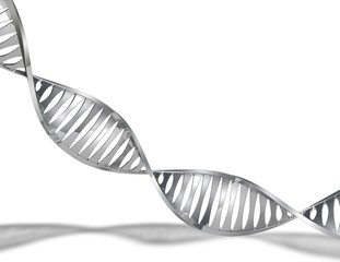 DNA 3d abstract model isolated on white.