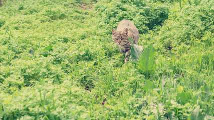 Cat hiding in the grass. The image is tinted and selective focus