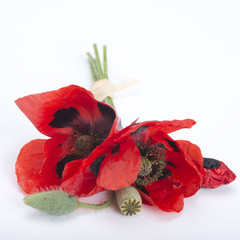 poppy bouquet on white background