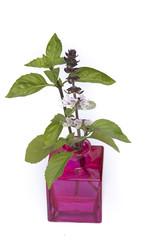 basil in vase