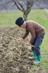 Senior man sowing potatoes
