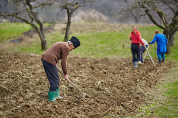 Family of peasants sowing potatoes