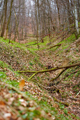 Fallen trees in a forest on springtime