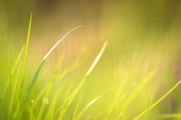 Grashalme im Sonnenlicht