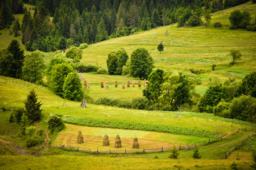 Summer landscape in the Carpathians