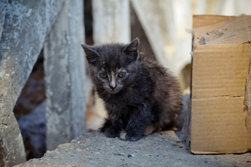 Cute homeless cat looking at camera