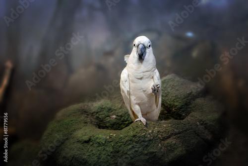 Tuinposter Papegaai beautiful white parrot ara