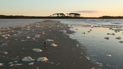 Birds among the sea foam covered beach