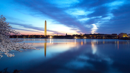 Washington Monument at night with cherry blossom