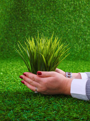 Close-up of woman hands holding plant