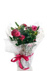 pianta di rosa in vaso incartata con fiocco