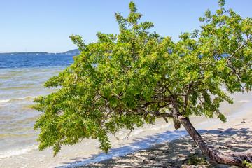 Árvore na beira da lagoa