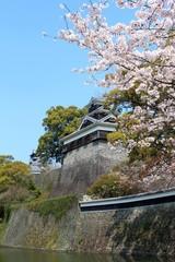 春の熊本城 飯田丸と桜