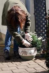 Frau pflanzt im Garten Margaritte in Pflanztopf