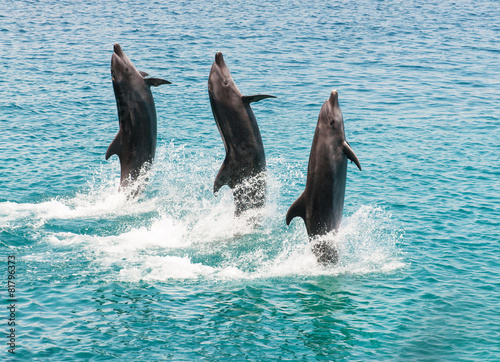 Tuinposter Dolfijn bottlenose dolphins
