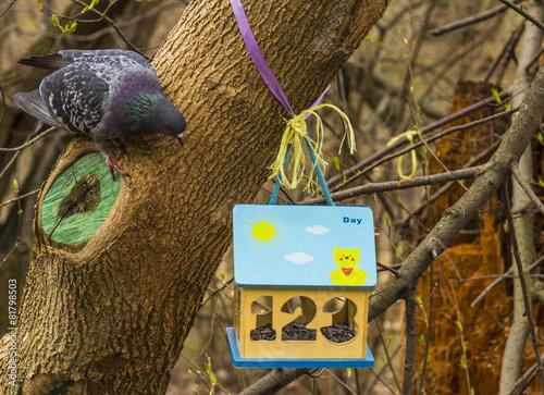 Leinwanddruck Bild Птица около кормушки,  скворечник в парке