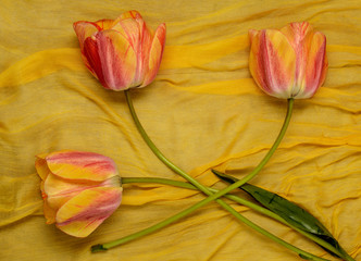 orange tulips on yellow cloth