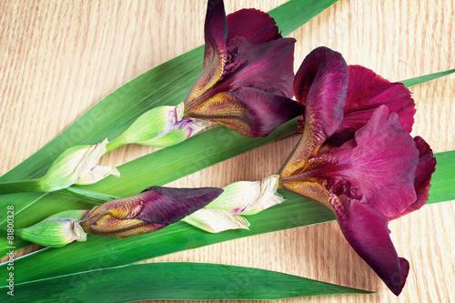 Foto op Canvas Iris Still life: flowering irises on the table surface.