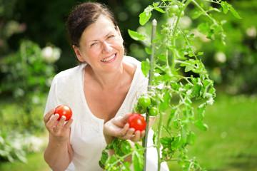 Frau betrachtet Tomaten am Tomatenstock im Garten