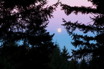full moon at sunrise - forest view