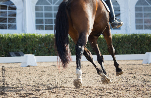 In de dag Paarden Dressage Horses