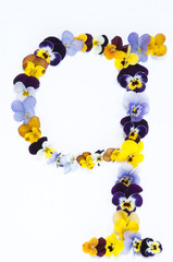 letter Q alphabet made from pansy flowers