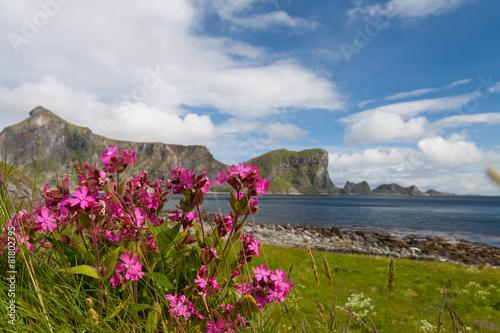 Poster Scenic beach on Lofoten islands