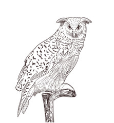 owl monochrome drawing on white
