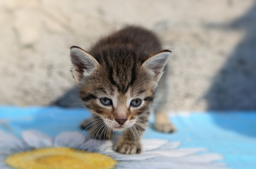 Little homeless kitten