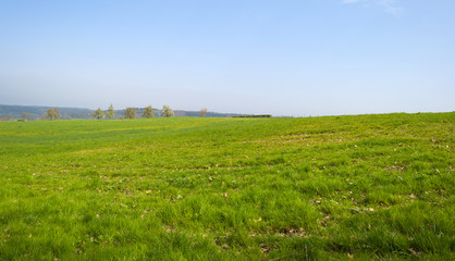 Panorama of a sunny green meadow on a hill