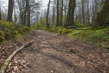 Dirt road through a forest in sunlight in spring