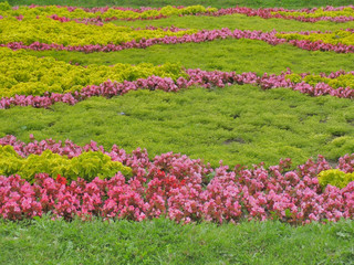 Summer lawn with green and pink floral bushes