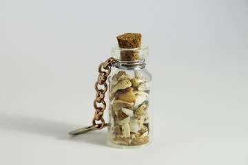 Small Seashells in a bottle