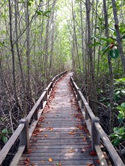 Wooden walkway deep in mangroove forest
