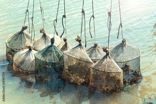 fishing clams in the sea with nets