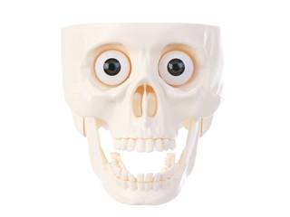 Human plastic skull front view