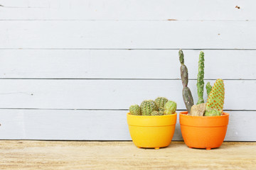 Cactus  and water pot on wood table