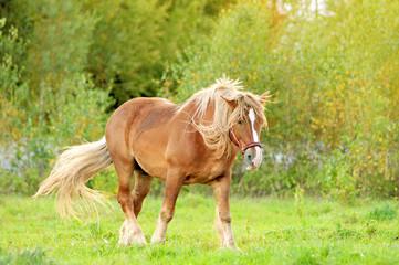 Draft horse on an autumn pasture