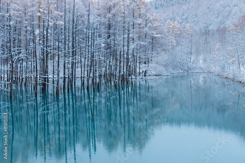 Foto op Plexiglas Japan 初雪の青い池