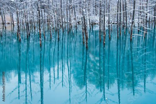 初雪の青い池