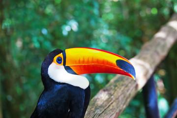 Large bird with  huge yellow beak