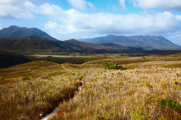 Trail through highland meadows in Tasmanian mountains