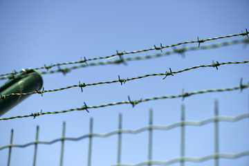 Green wire fence