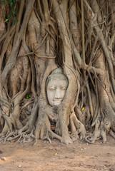 Buddha head in tree roots ,Wat mahathat ,Ayutthaya ,Thailand