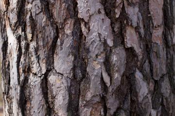 Old pine bark.