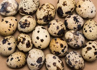 Spotty quail eggs as food background
